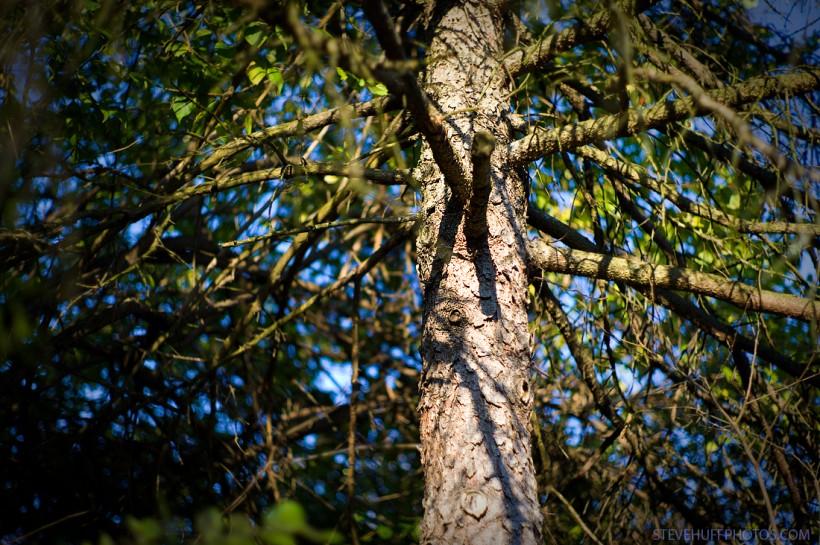 Tree 50 Lux ASPH