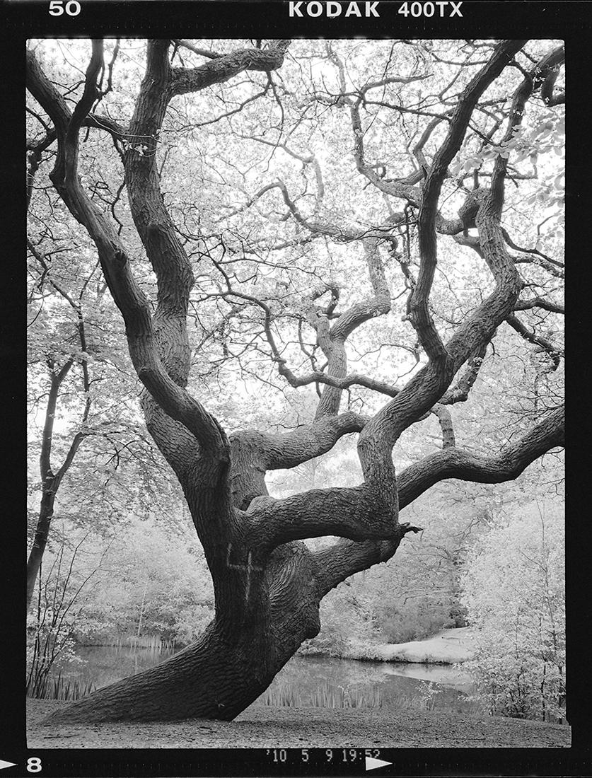 Photographing Trees by Ibraar Hussain | Steve Huff Photo