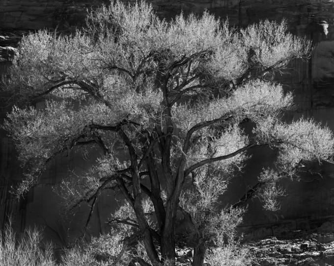 HA-LeicaMM-Moab-Feb2013-2