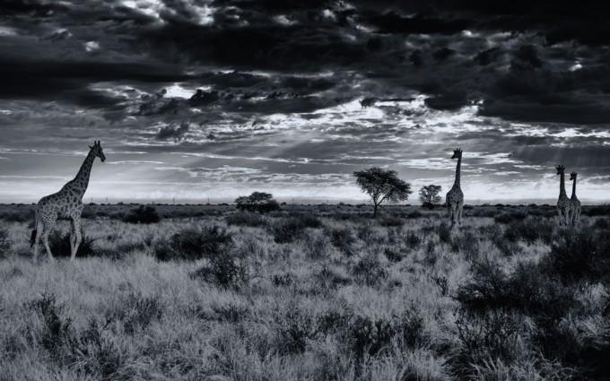 5 Kalahari desert M9 Summilux 50