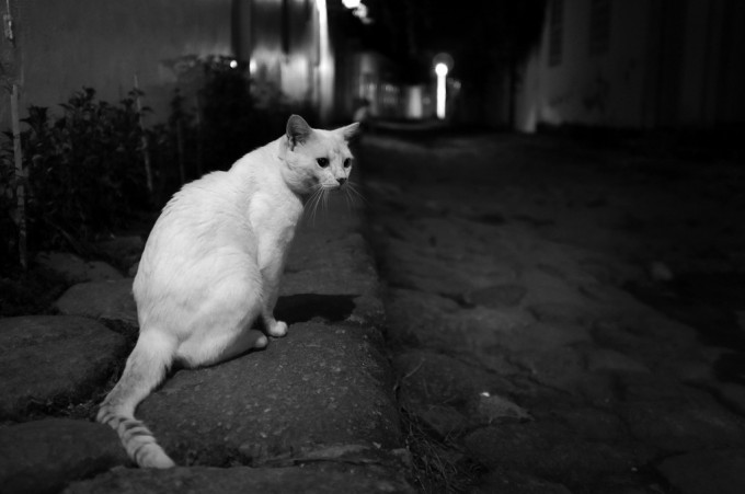 A cat in the dark