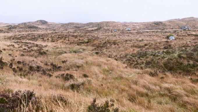 Glen Coe Bog