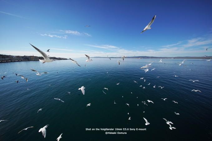 voigt_105_seagulls1