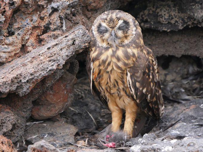 OwlRest400f8