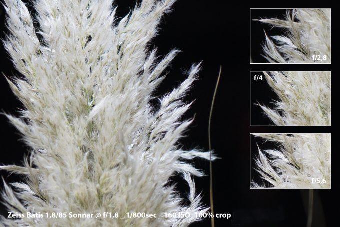 08-grass_batis-18-crop
