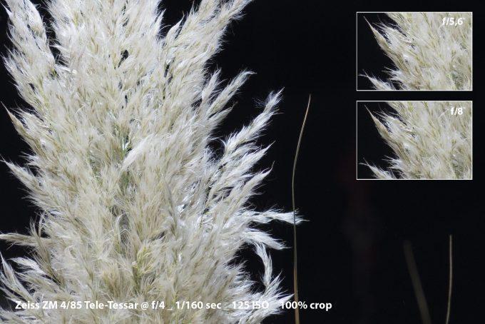 09-grass_zm-4-crop