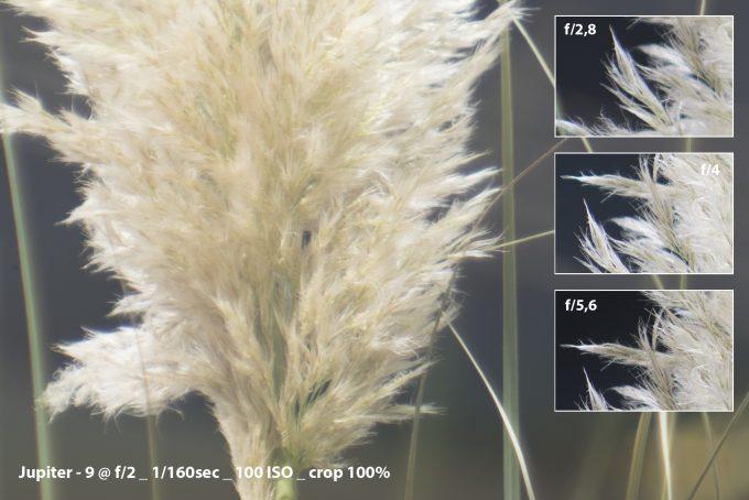 10-grass_jupiter-2-crop