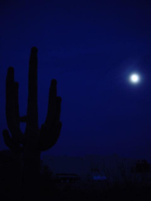cactusmoon