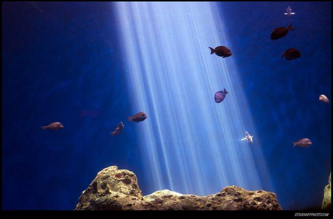 fishbeam