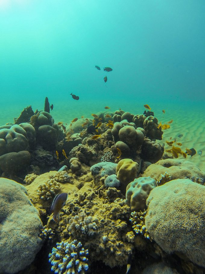 Beautiful little underwater arrangement at Ras El Quseir dive sp