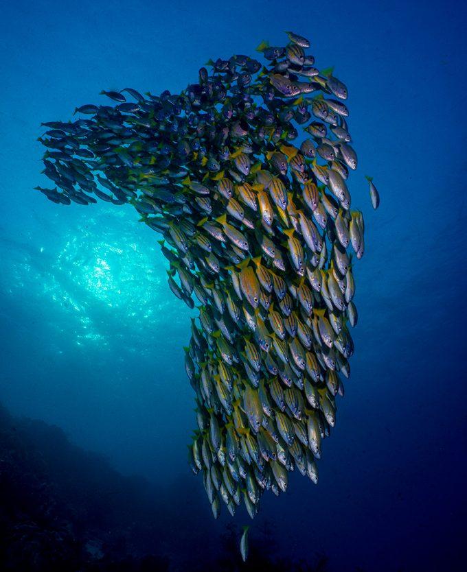 fishcluster